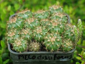 arrosage semis cactus. Black Bedroom Furniture Sets. Home Design Ideas