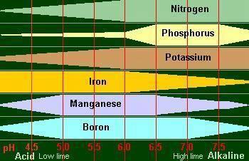 Quelle eau pour nos cactus articles du cactus francophone - Comment mesurer le ph ...