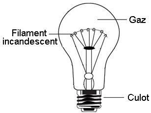 L 39 clairage artificiel articles du cactus francophone - Lampe a incandescence classique ...