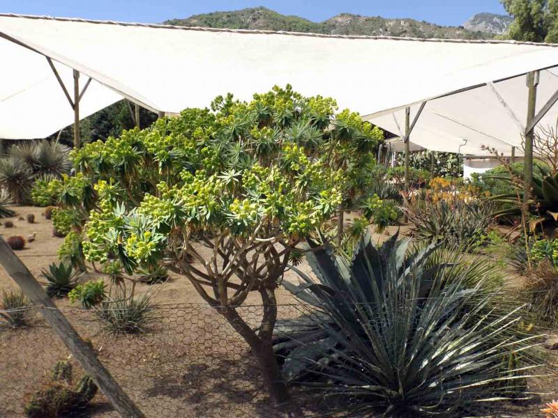 cactus alvaralto un jardin exceptionnel au bout du monde au chili. Black Bedroom Furniture Sets. Home Design Ideas