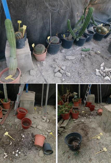 2-EchinocactusNotosGymnocalyciumsetcrobadosP1110266LR.jpg