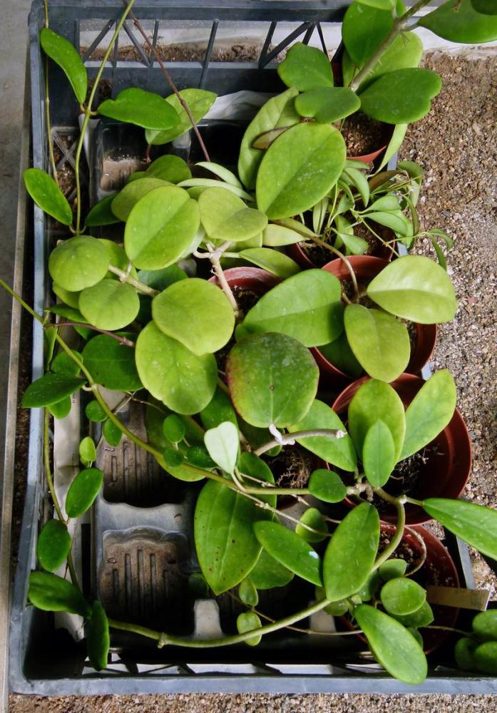 Catalogue plantes kaktitos en ligne ce soir apr s 2 ans for Plante en ligne