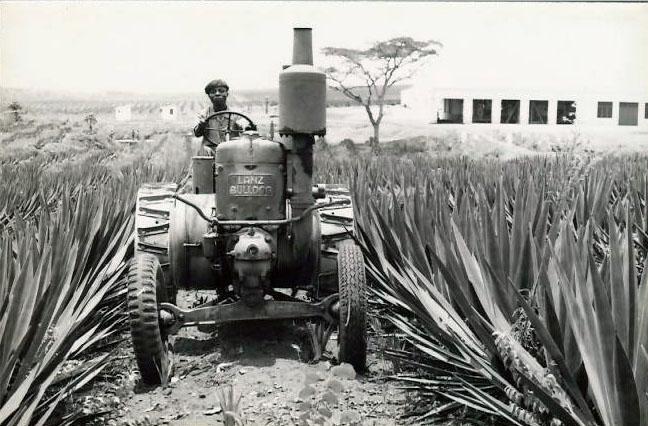 a0662_Angola-Sisal.jpg