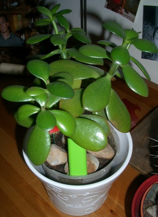 des conseils pour mettre mes cactus euphorbes et plantes grasses l 39 ext rieur. Black Bedroom Furniture Sets. Home Design Ideas