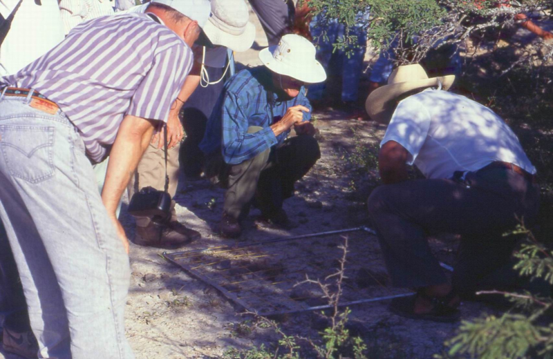 AriocarpuskotschoubeyanusestudioTulaTam.Mex.2.jpg