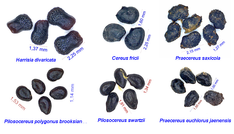 Seedcomparison.jpg