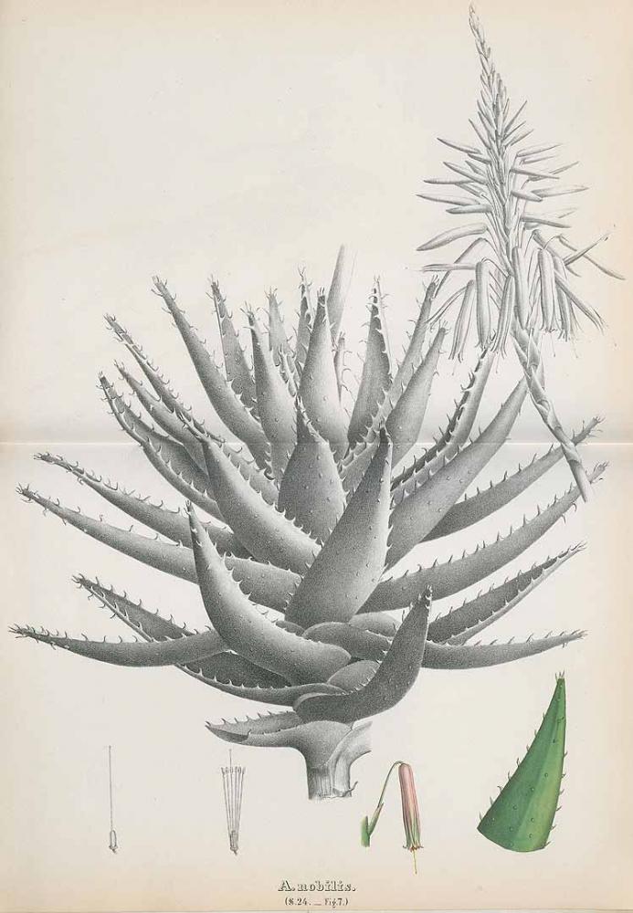 184087.jpg