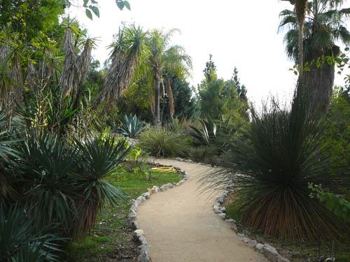 Jardin botanique de nice for Jardin wilson nice