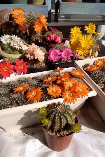 floraison2.jpg