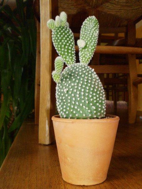 nouveau cactus identification d 39 une plante grasse et d 39 un cactus. Black Bedroom Furniture Sets. Home Design Ideas