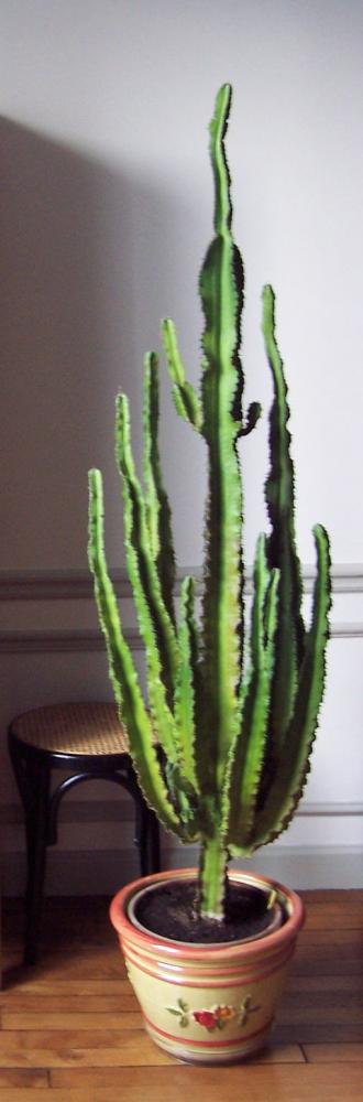 cactus qui jaunit avec photo. Black Bedroom Furniture Sets. Home Design Ideas