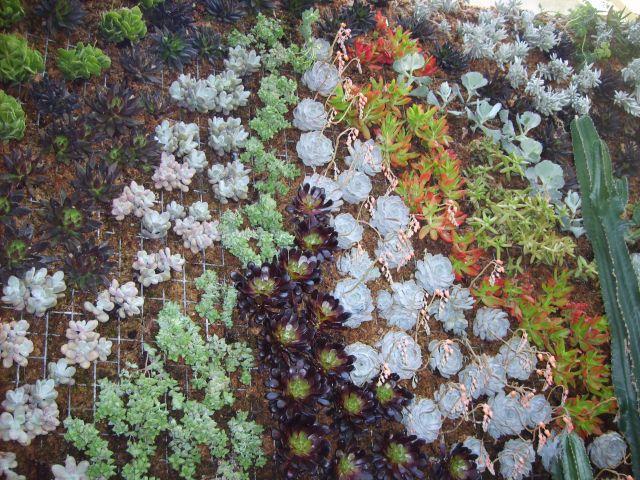 Mur v g tal en plantes grasses for Mur vegetal fausse plante