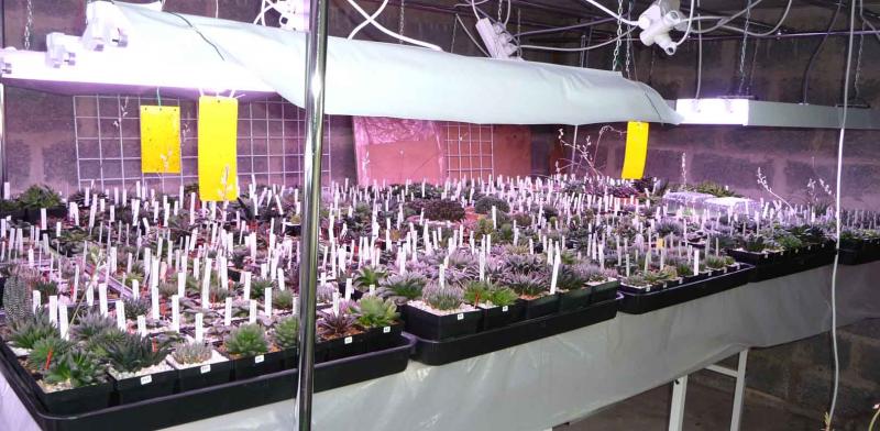 quelle type d 39 clairage pour vos plantes semis. Black Bedroom Furniture Sets. Home Design Ideas