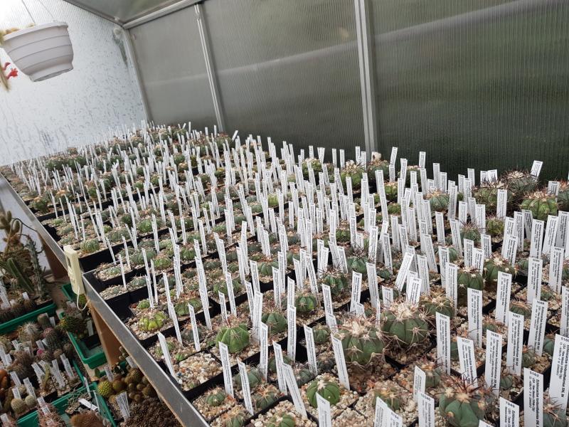 Echinocactus-1.jpg