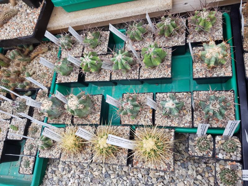 Echinocactus-3.jpg