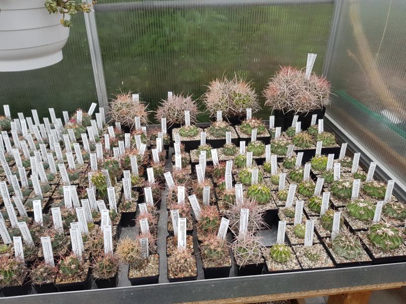 Echinocactus-4.jpg