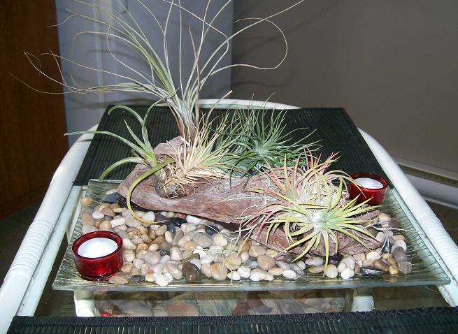 Des plantes qui ne vivent pas dans la terre et ni dans l 39 eau - Plantes qui poussent dans l eau ...
