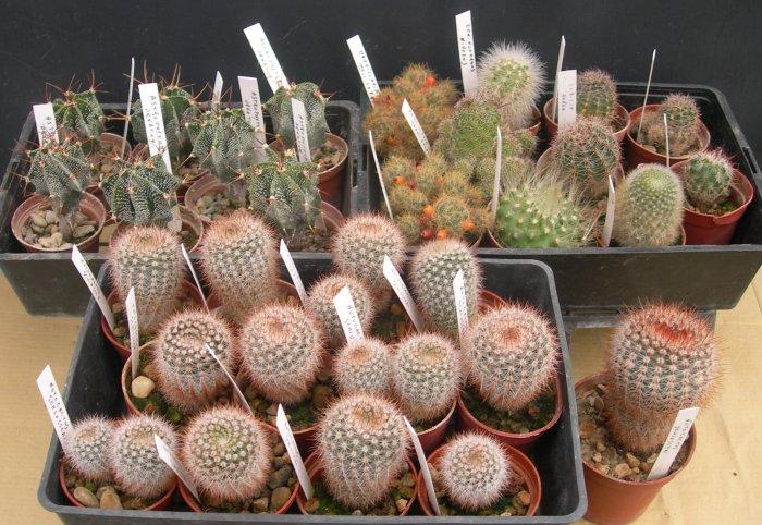 Vente de plantes cactus for Vente de plantes par correspondance