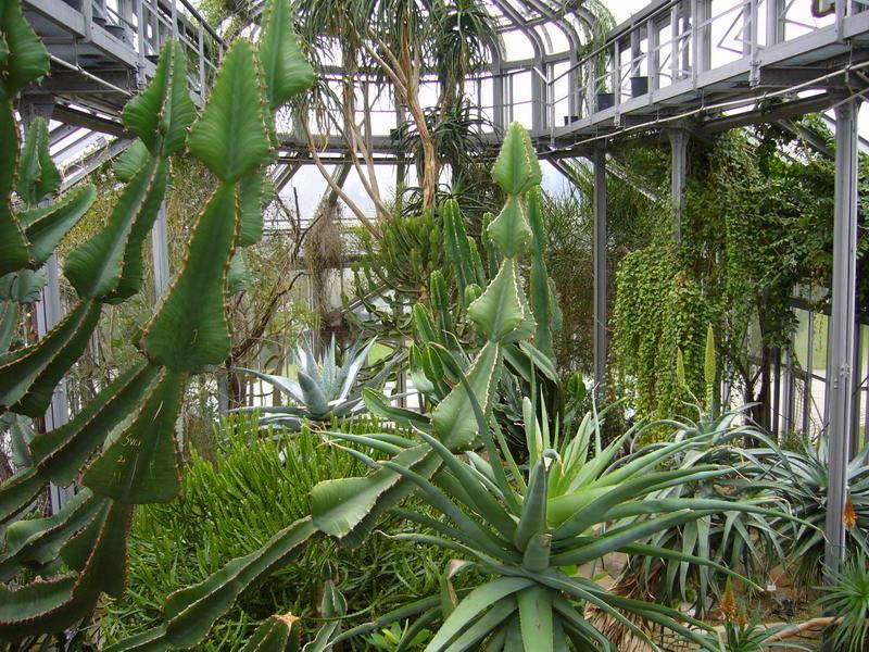Au cactus francophone jardin botanique de berlin for Le jardin zoologique de berlin