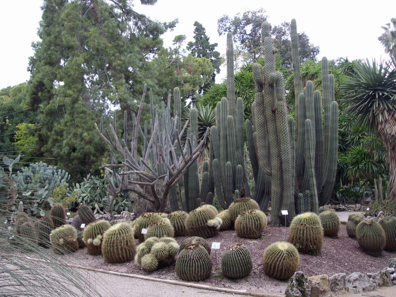 Au cactus francophone jardin botanico de valencia - Jardin botanico valencia ...