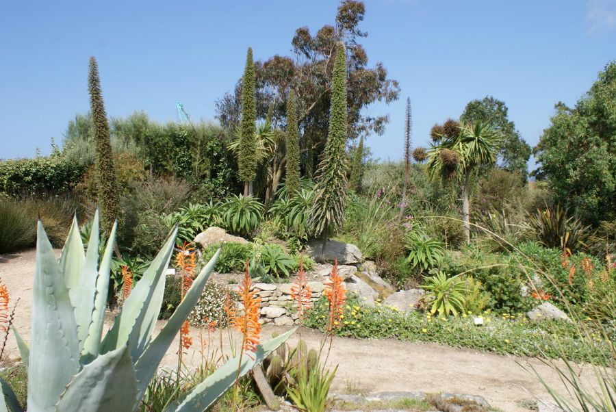 Au cactus francophone le jardin exotique de roscoff - Jardin exotique roscoff tourcoing ...