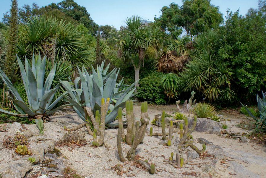 Au cactus francophone le jardin exotique de roscoff - Le jardin exotique de roscoff ...