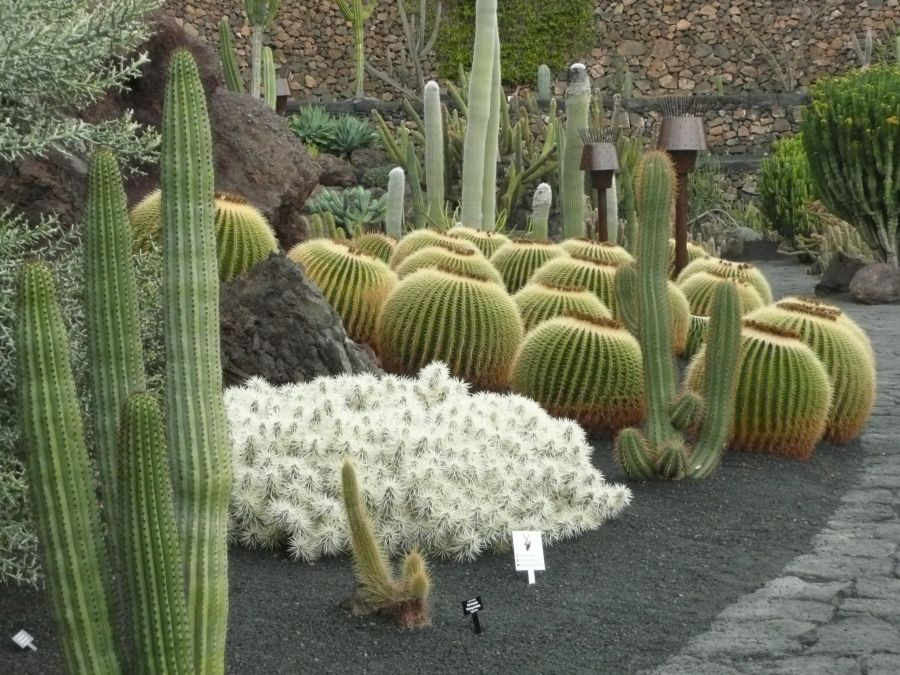 Jardin Cactus Beautiful Jardin De Cactus With Jardin Cactus Simple