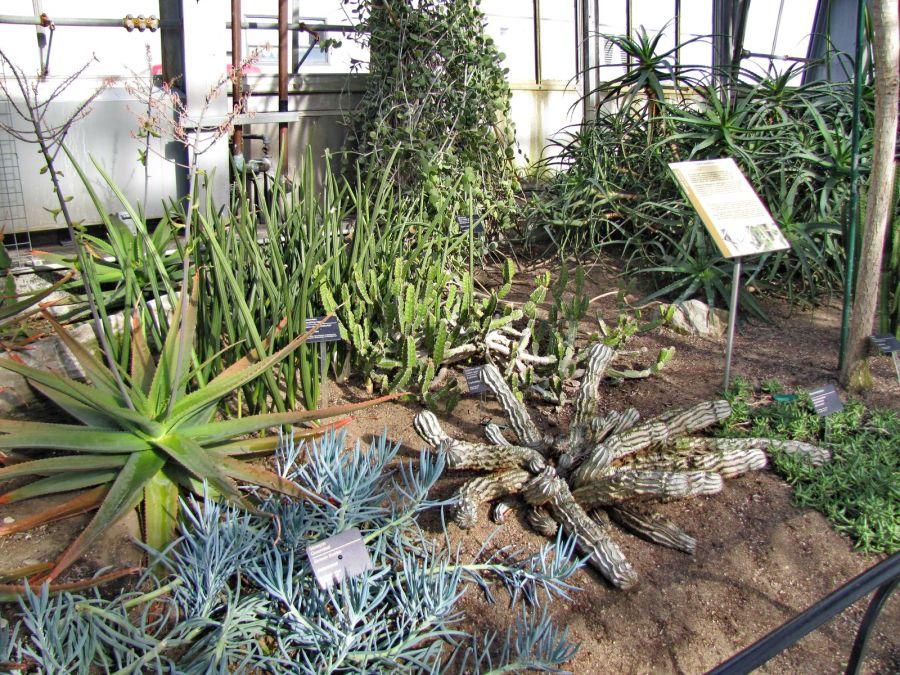 Au cactus francophone jardin botanique de montreal for Au jardin de fanny montreal