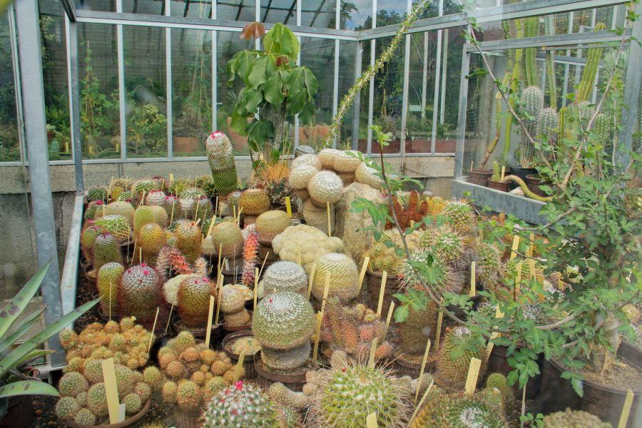 Au cactus francophone jardin des plantes de nantes for Jardin des plantes nantes de nuit