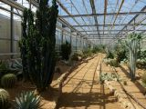 Cactuseraie de Creism�as